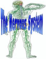 Nervous system clear 200