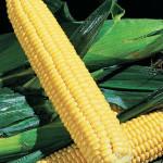 Corn Burpee