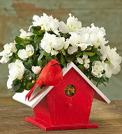 cardinal birdhouse Azalea 175