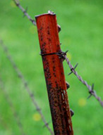 barbed wire 146