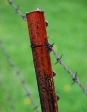 Barbed Wire 175