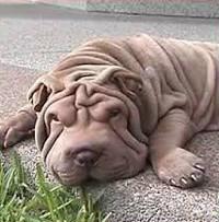 Wrinkles 200