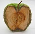 oxidizing apple 150